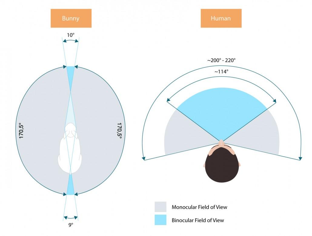 VR field of view diagram
